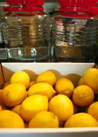 Lemon01 06